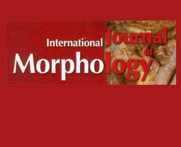 B_Int_J_Morphology