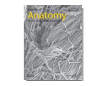 B_j anatomy