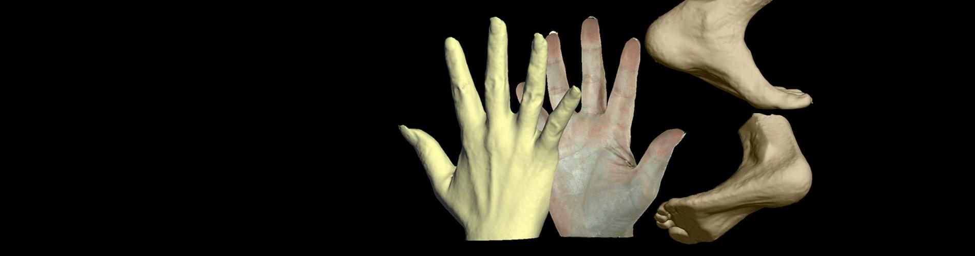 3dMDhand_foot-HPFv2